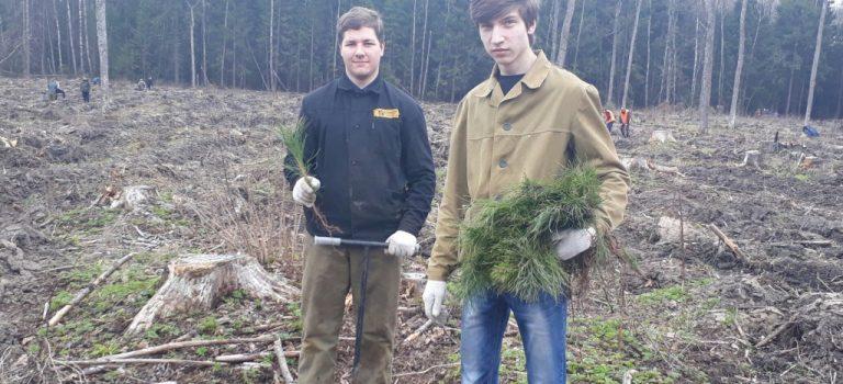 Оказание помощи лесничеству студентами перед акцией «Лес победы»